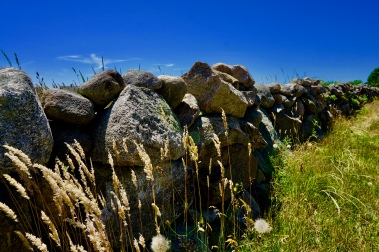 Trying to be artsy with my camera. The island has miles of stone walls.